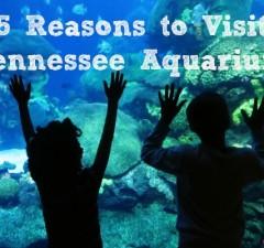 5 Reasons to Visit Tennessee Aquarium